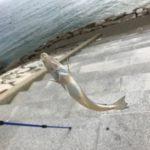 なかなか厳しい香良洲海岸キス釣りでした