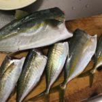 国崎で釣りました魚たちを美味しく料理