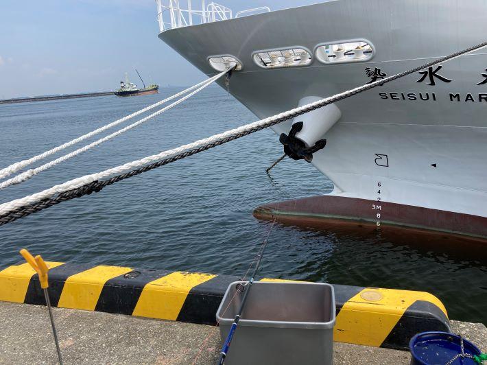 松阪港サビキ釣り